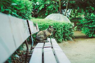 猫の写真・画像素材[3454]