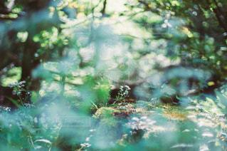 自然の写真・画像素材[3442]