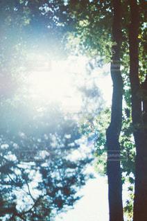 自然の写真・画像素材[3441]