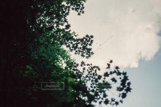 自然の写真・画像素材[3436]