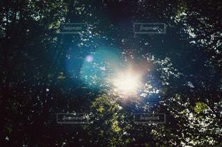 自然の写真・画像素材[3435]