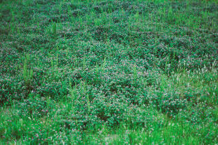 自然の写真・画像素材[3432]