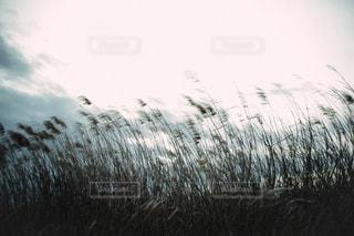 草で覆われた野原の上に立つ羊の群れの写真・画像素材[2430317]