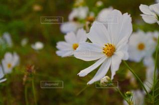 花の写真・画像素材[293154]