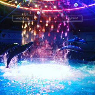 イルカ,水族館,ナイトショー