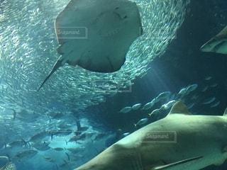 水面下を泳ぐ魚たちの写真・画像素材[1142417]