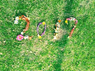 花の写真・画像素材[286009]
