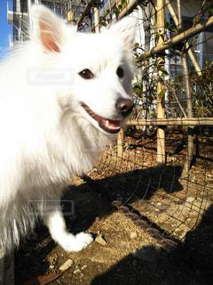 犬の写真・画像素材[286951]