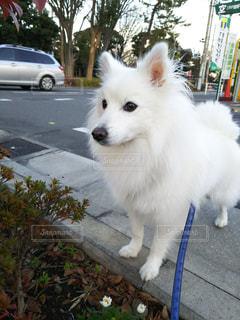犬の写真・画像素材[287329]