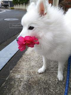 犬 - No.293257