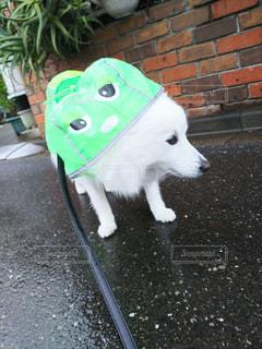 犬の写真・画像素材[293263]