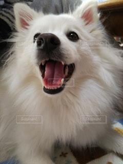 犬の写真・画像素材[293270]