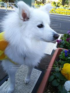 犬 - No.305186