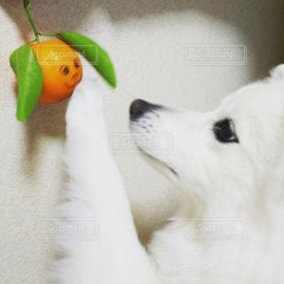 犬の写真・画像素材[328577]