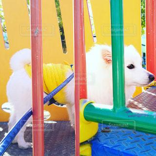 犬の写真・画像素材[329657]