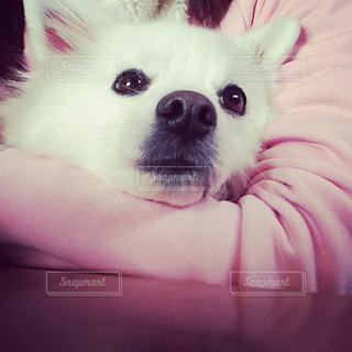 犬 - No.329660