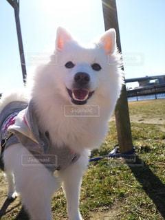 犬の写真・画像素材[331417]