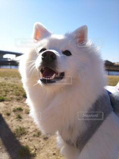 犬の写真・画像素材[331432]