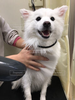 犬 - No.335223