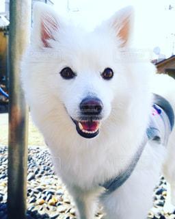 犬 - No.337402