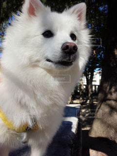犬の写真・画像素材[342683]