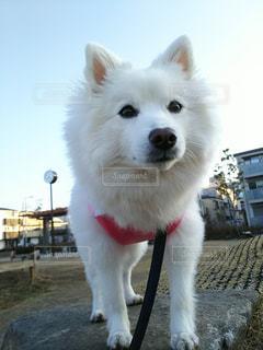 犬の写真・画像素材[346517]