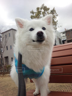 No.363032 犬