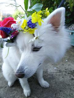 犬の写真・画像素材[414105]