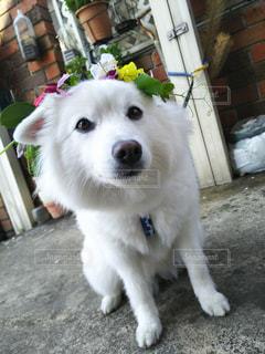 犬の写真・画像素材[417384]