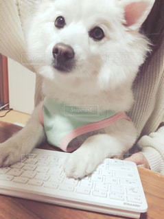 犬の写真・画像素材[534957]