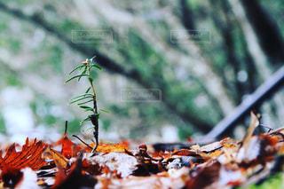 自然の写真・画像素材[286179]