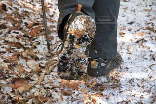 雪の写真・画像素材[290023]