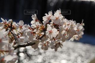 春 - No.319358