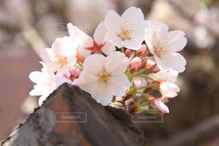 花の写真・画像素材[319616]