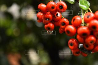 植物の写真・画像素材[315017]