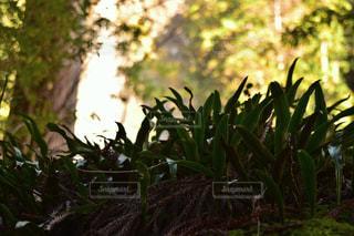 自然の写真・画像素材[293345]