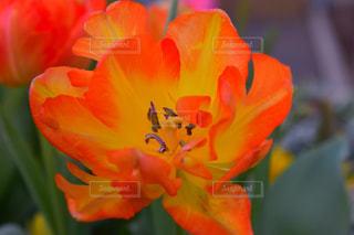 花の写真・画像素材[339836]