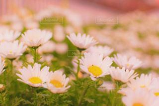 花の写真・画像素材[410264]