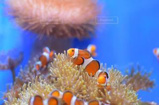 海の写真・画像素材[598909]