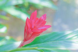 ピンクの花 - No.913482