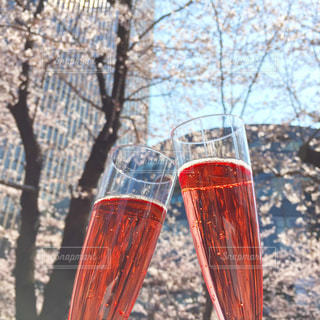 桜の下で乾杯!の写真・画像素材[756024]