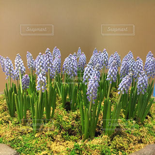春が来たの写真・画像素材[1043388]