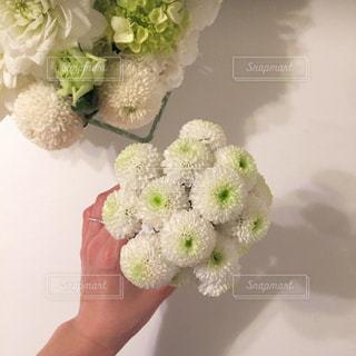花を持っている手の写真・画像素材[1127095]