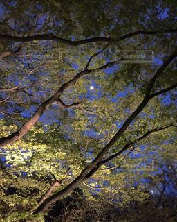 庭園ライトアップの写真・画像素材[1872678]