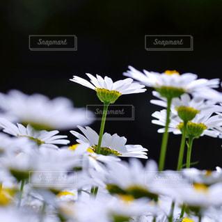 花の写真・画像素材[9401]