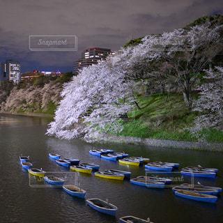 桜 - No.9398