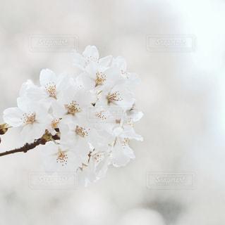 花の写真・画像素材[9391]