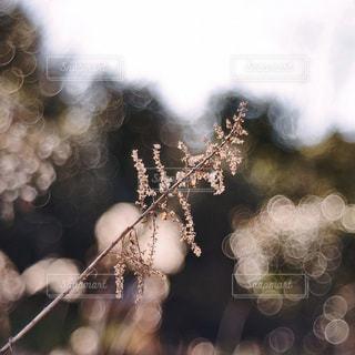 自然の写真・画像素材[9390]