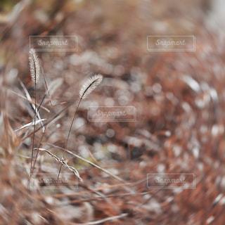 植物の写真・画像素材[9389]