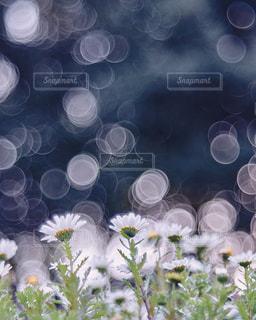 花の写真・画像素材[9387]